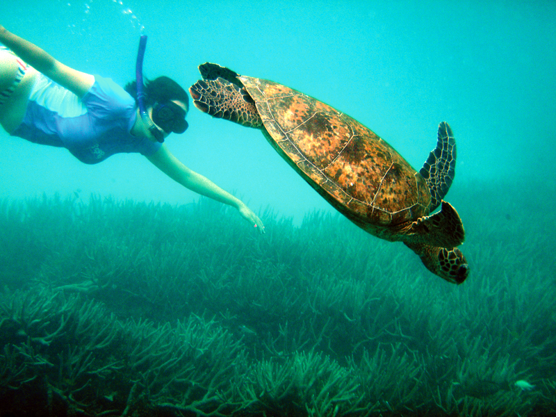 Australia: Reef Diving with a Tortoise